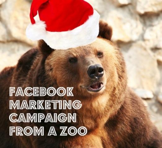 Facebook-digital-marketing-campaign-zoo